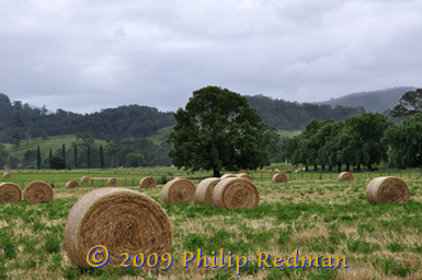 Haystack in the fields at Barrington New South Wales.